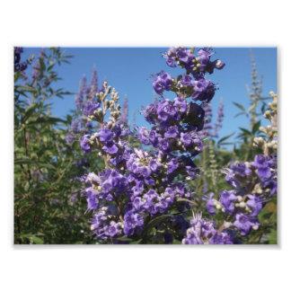 Flores de la púrpura del árbol casto arte fotografico