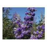 Flores de la púrpura del árbol casto postal