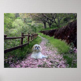 Flores de la púrpura del poster de Shih Tzu