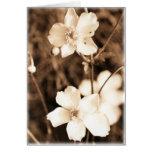 Flores de la sepia tarjetón