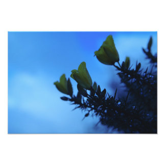 Flores de la tarde del invierno fotografías