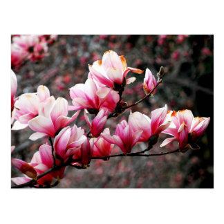 Flores de la universidad de Georgetown, Postales