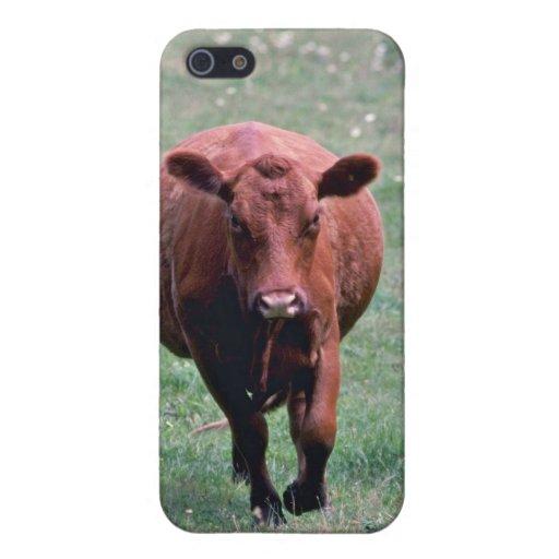 Flores de la vaca iPhone 5 funda