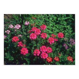 Flores de la verbena del jardín (verbena Hybrida) Invitaciones Personales