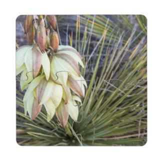 Flores de la yuca de Soaptree en el Missouri Posavasos De Puzzle