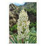 Flores de la yuca en las Azores Postal