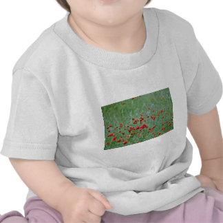Flores de las amapolas de maíz (Papaver Rhoeas) Camiseta