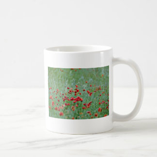 Flores de las amapolas de maíz (Papaver Rhoeas) Taza De Café