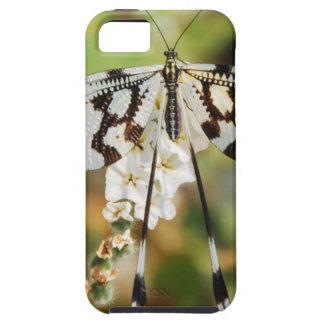 Flores de las flores de mariposa que casan paz de iPhone 5 fundas