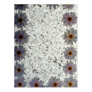 flores de las margaritas blancas postales