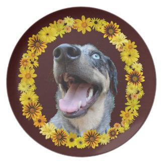 Flores de las margaritas del amarillo del perro de plato de cena