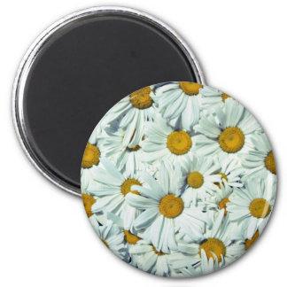 Flores de las margaritas imán de frigorifico