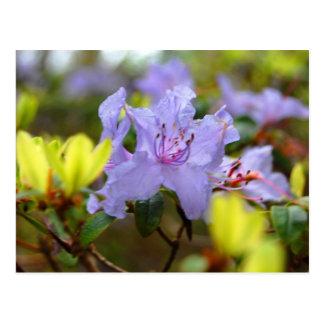 Flores de las montañas escocesas postal