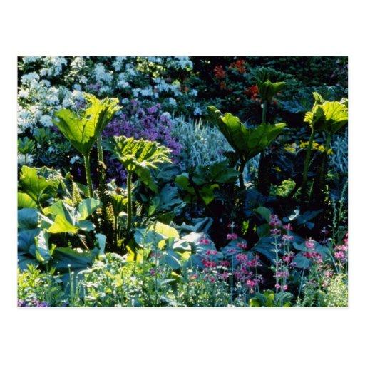 Flores de las plantas de pantano postales