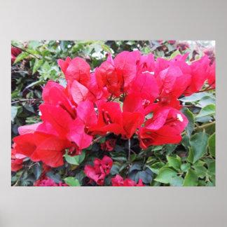 Flores de las rosas fuertes en una vid póster