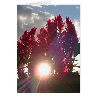 Flores de llama de la puesta del sol - vertical tarjeta pequeña