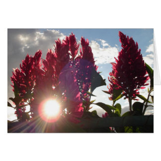Flores de llama en la puesta del sol v2 tarjeta pequeña
