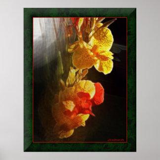 Flores de llama hawaianas póster