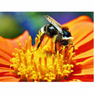 Flores de los abejorros macras esculturas fotográficas