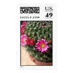 Flores de los cactus