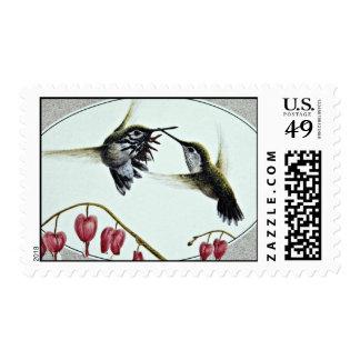 Flores de los colibríes del Calliope Sellos Postales