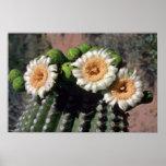 Flores de los flores del cactus del Saguaro Impresiones