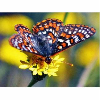 Flores de los insectos de las mariposas de la mari fotoescultura vertical