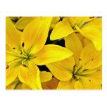 Flores de los lirios de día postales