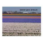 Flores de los Países Bajos Postales
