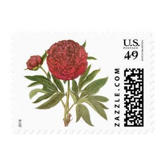 Flores de los Peonies del Peony del vintage de Sellos Postales