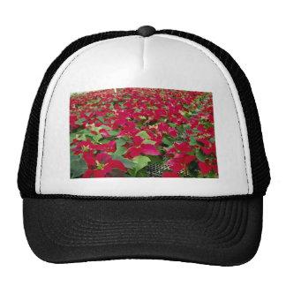 Flores de los Poinsettias Gorras