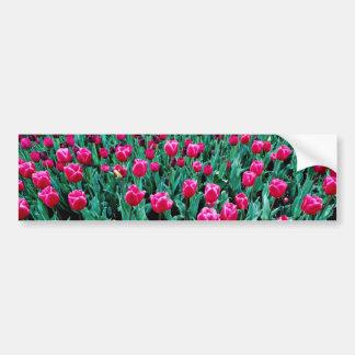 Flores de los tulipanes de Triumph Etiqueta De Parachoque