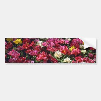 Flores de los tulipanes del doble mezclado etiqueta de parachoque