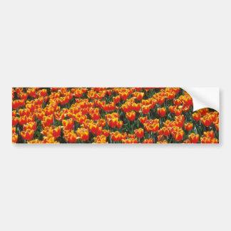 Flores de los tulipanes del rojo anaranjado y del  pegatina de parachoque