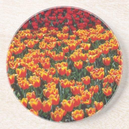 Flores de los tulipanes del rojo anaranjado y del  posavasos cerveza