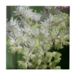 Flores de los Wildflowers de la flora de Idaho del Tejas Ceramicas