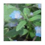 Flores de los Wildflowers de la flora de Idaho del Azulejo Cerámica