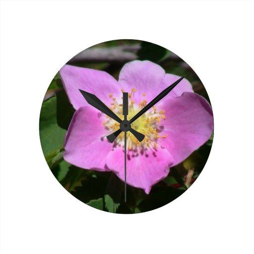 Flores de los Wildflowers de la flora de Idaho del Relojes