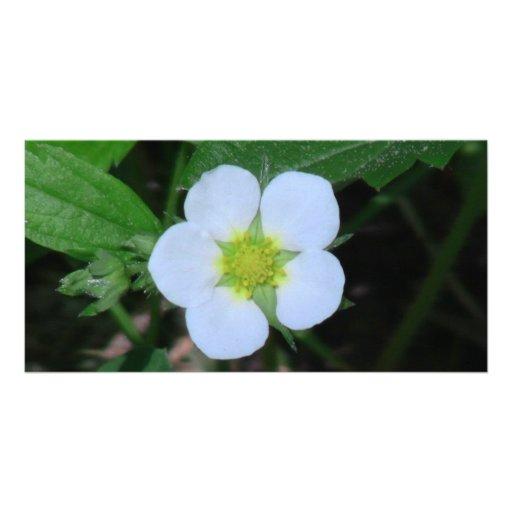 Flores de los Wildflowers de la flora de Idaho del Tarjeta Personal Con Foto