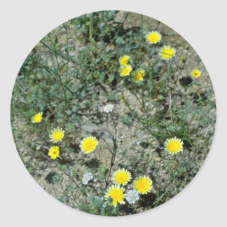 Flores de los Wildflowers del desierto Etiquetas Redondas