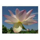 Flores de Lotus y postal del cielo azul