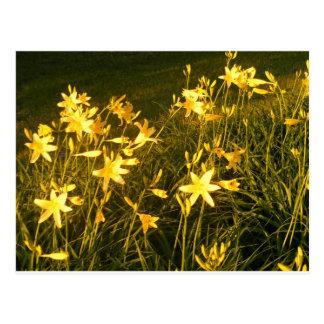 Flores de Maine Tarjeta Postal