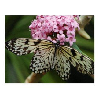Flores de mariposa 2 tarjetas postales