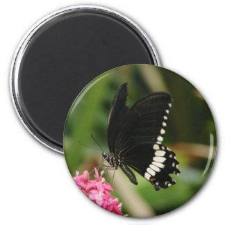 Flores de mariposa 3 imán para frigorifico