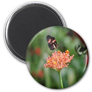 Flores de mariposa 5 imán de frigorifico