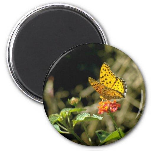 Flores de mariposa anaranjadas imanes