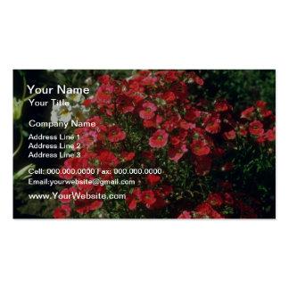 Flores de Nemesia (Nemesia Strumosa) Plantilla De Tarjeta Personal