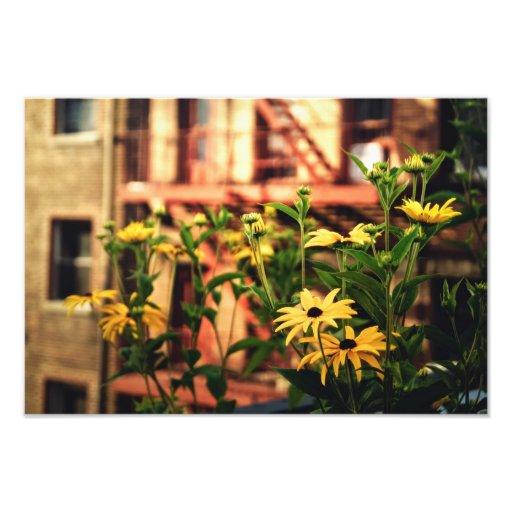 Flores de New York City Fotografía