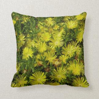 Flores de oro del amarillo de la planta de hielo cojin