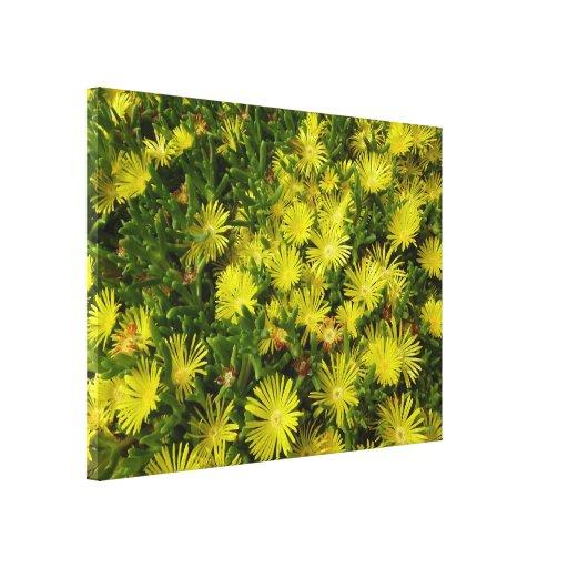 Flores de oro del amarillo de la planta de hielo lienzo envuelto para galerías